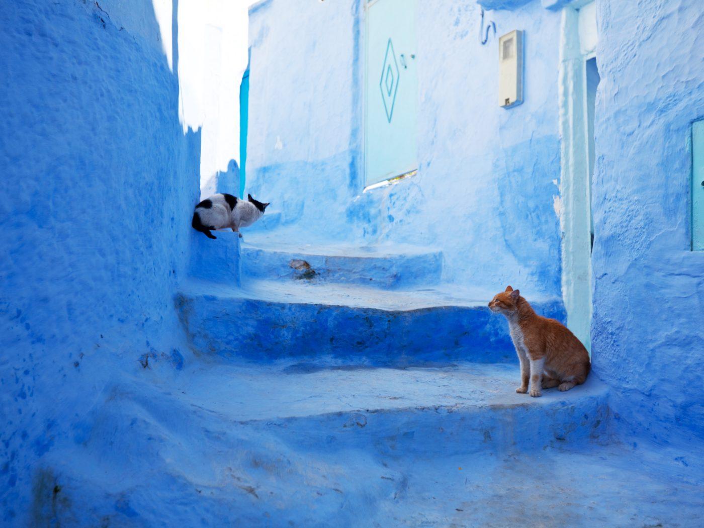 en-morocco-estas-loco
